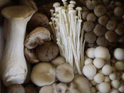 photograph courtesy of nouvelle mushrooms Gnocchi With Exotic Mushrooms