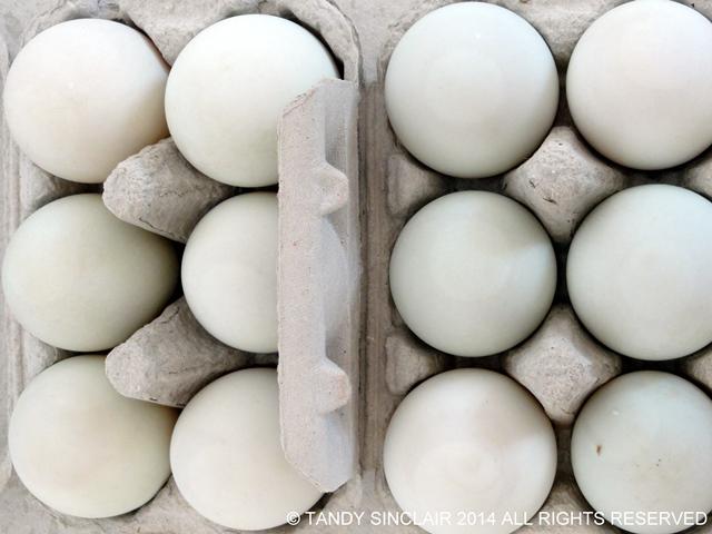 Duck Eggs In My Kitchen October 2014