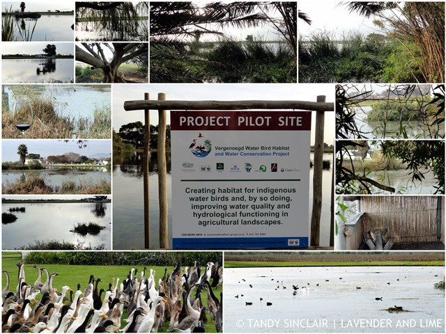 """""""The Vergenoegd Waterbird Habitat and Water Quality Project"""""""